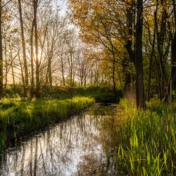 Watertje in het bos