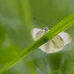 Tussen het hoge gras