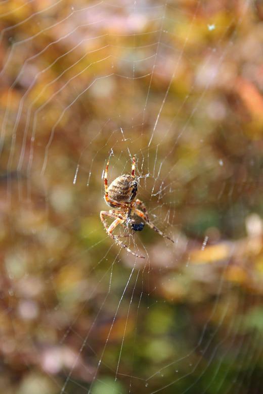 Spinnig - Even in de achtertuin geschoten....
