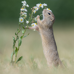 The smell of flowers