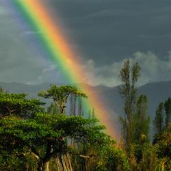 Goudpot in het oerwoud