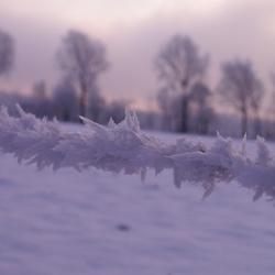 Winter (prikkeldraad?)