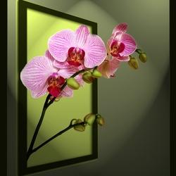 Orchidee (maar dan ff anders...)