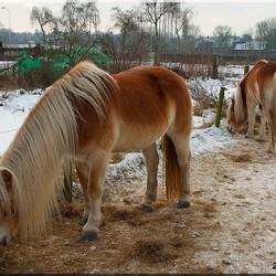 3 pony,s
