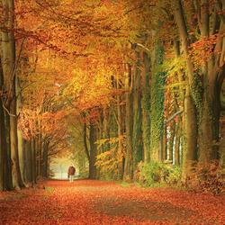 Lopen in de herfst