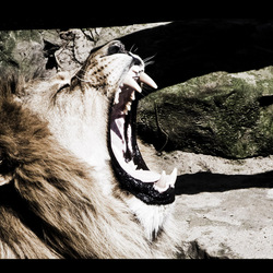 NOTHING BEATS A LION.