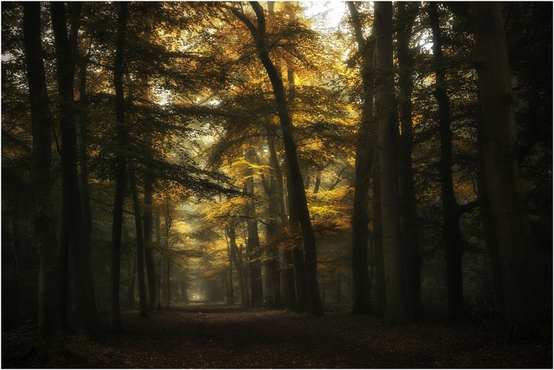 fairytale forest -