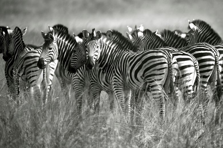 Lijnenspel 1 - In het prachtige, nog niet zo toeristische, Mudumu National Park in Namibië zagen we deze mooie kudde zebra's. We hadden gelukkig