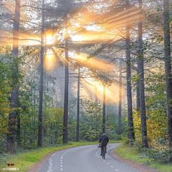 Fietser door het Texelse herfstbos.