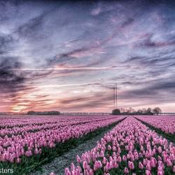 Zonsondergang Zuidelijk Flevoland