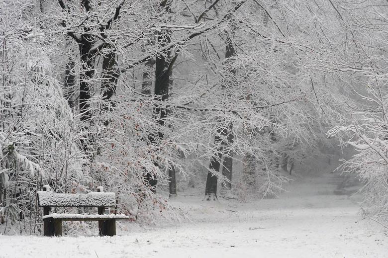 Witte wereld - Een prachtige zondag was het, tijdens de sneeuwbuien een wandeling gemaakt door het bos.