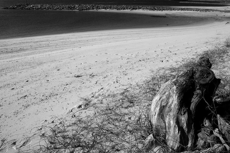boomstronk aan het water - nabij fort pannerden, aan de waal.