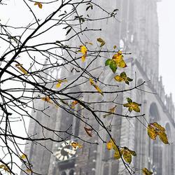 Ook in Utrecht is het herfst