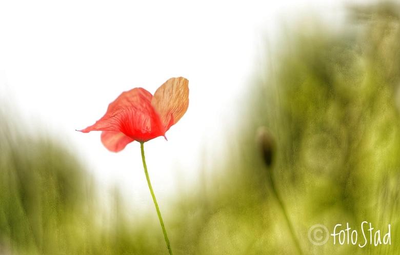 rood&fragiel -