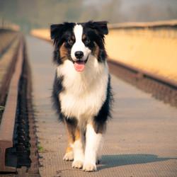 Hond op de brug