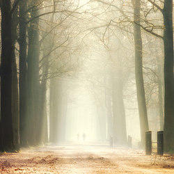 morning walkers