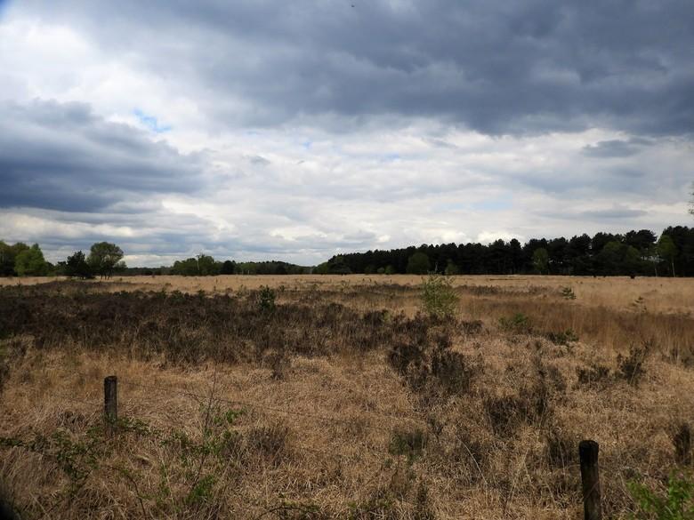 Neterselse Heide