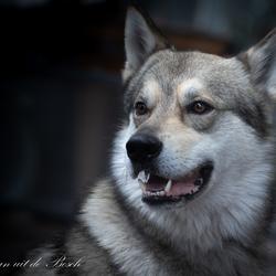 de hond uitlaten 2