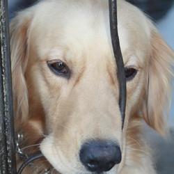 Ik wou dat ik 2 hondjes was ,dan kon ik samen spelen...