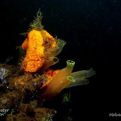 """""""onderwater""""stilleven"""