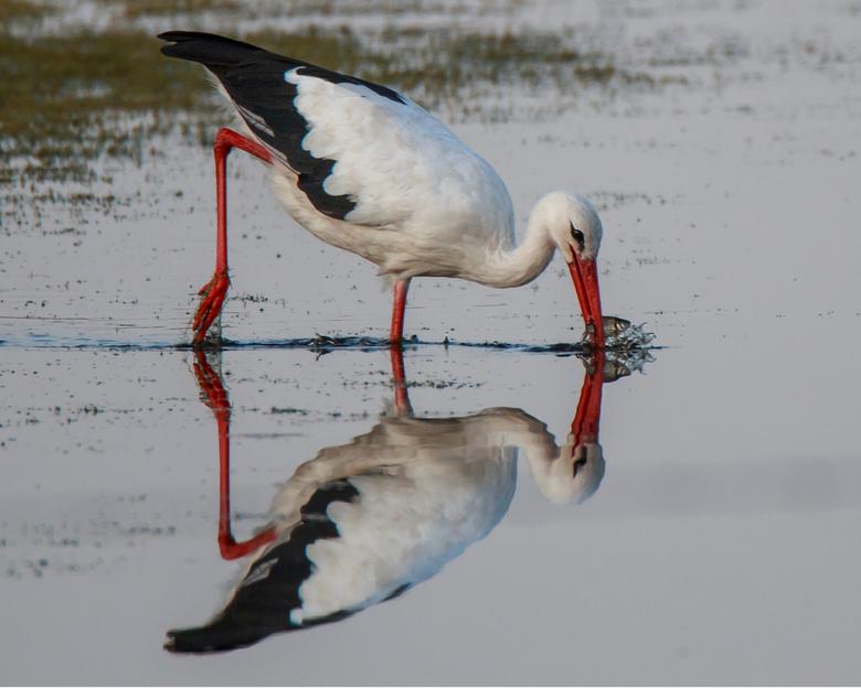 Spiegelsymmetrie -