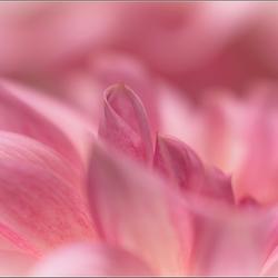 roze top