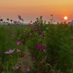 Mooie bermen en zonsondergang op Texel.