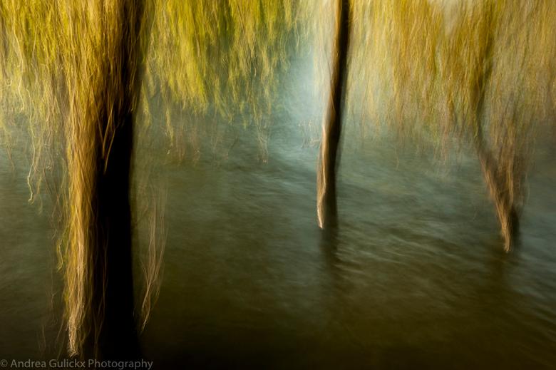 High water trees. - 'Hoog' tijd voor weer een upload. Dus een bijpassende 'Hoog' water foto van de Waal. Naast de macro fotografie