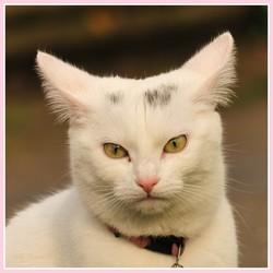Snoowy,  klein katje in mijn wijk