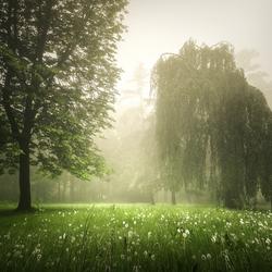 Spring fields forever