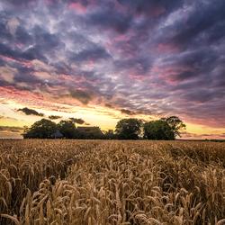 Schitterende luchten boven de graanvelden V
