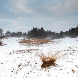 sneeuw landschap