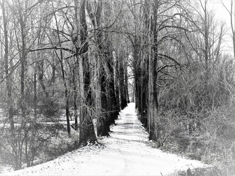 Winterpad - Winterpad
