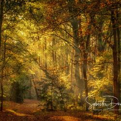 Autumn Daydream