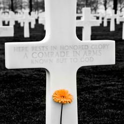 Unknown Soldiers, Lonely Graves