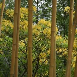 bamboe doorkijk
