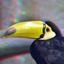 Toucan Blijdorp Zoo 3D
