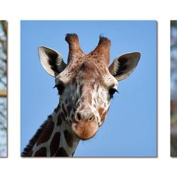 Giraffe drieluik