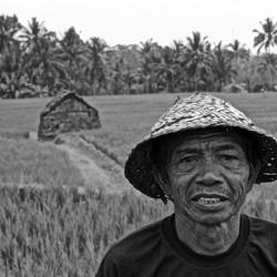 Bali farmer.