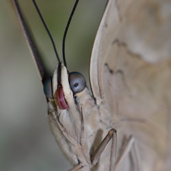 Vlinder close.