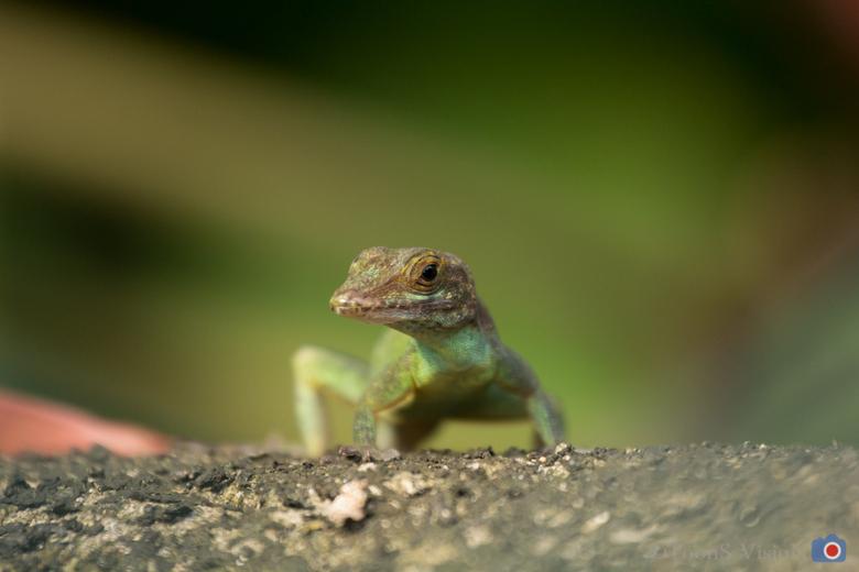 Salamander - Salamander van dichtbij in Jungle van Burgers Zoo.