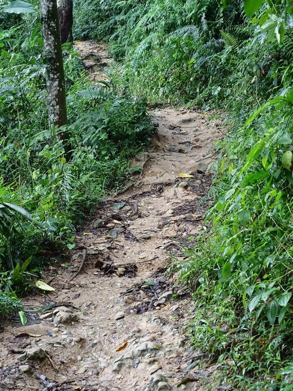 Mijn Reizen - Hier het pad die we moesten lopen  zeker  niet makkelijk  was  al van het begin drijf nat van het zweet  het was echt een calvarie berg