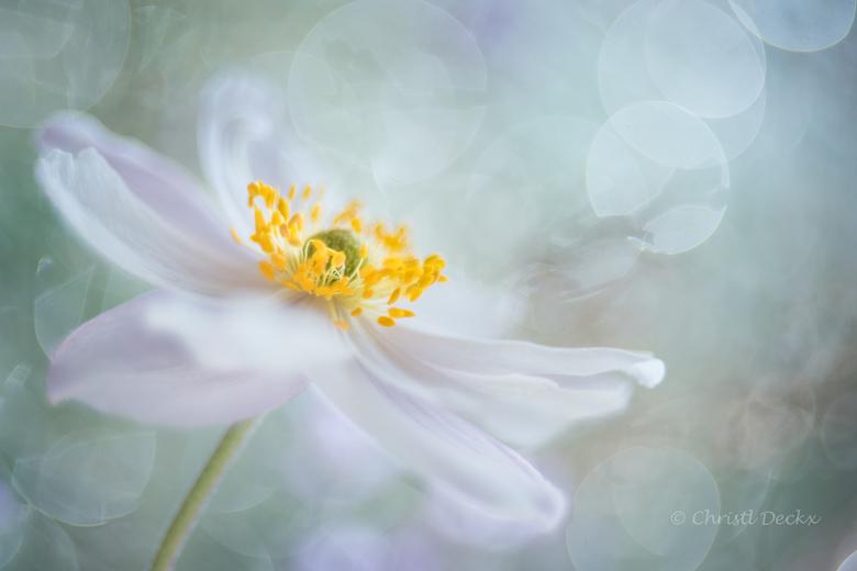 Rêverie de fleur -