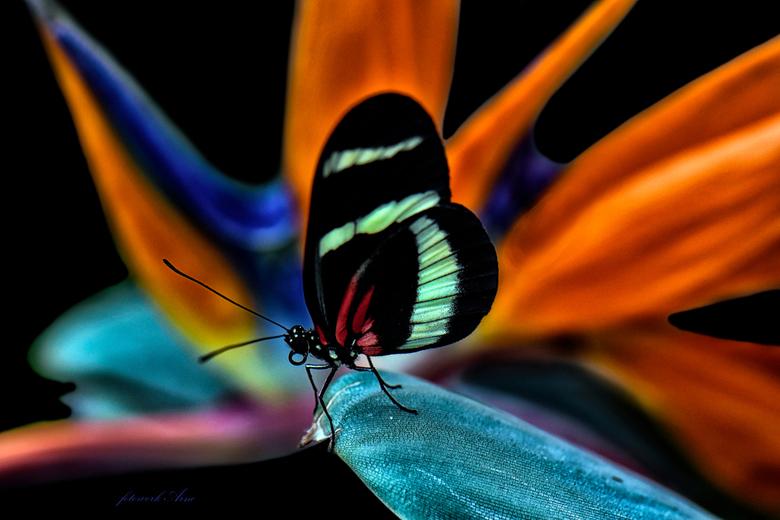 de kracht van kleur - stukje kunst werk met deze vlinder
