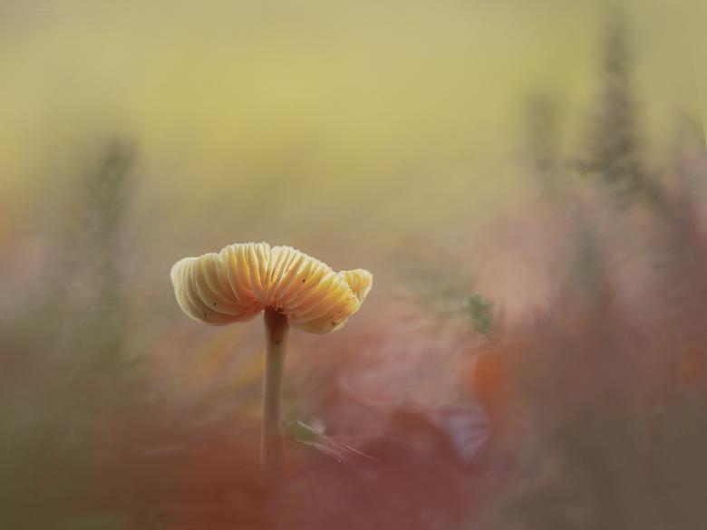 Dreamy - Heerlijk om in het bos op je knieën te liggen en dan van die mooie dromerige landschapjes te zien