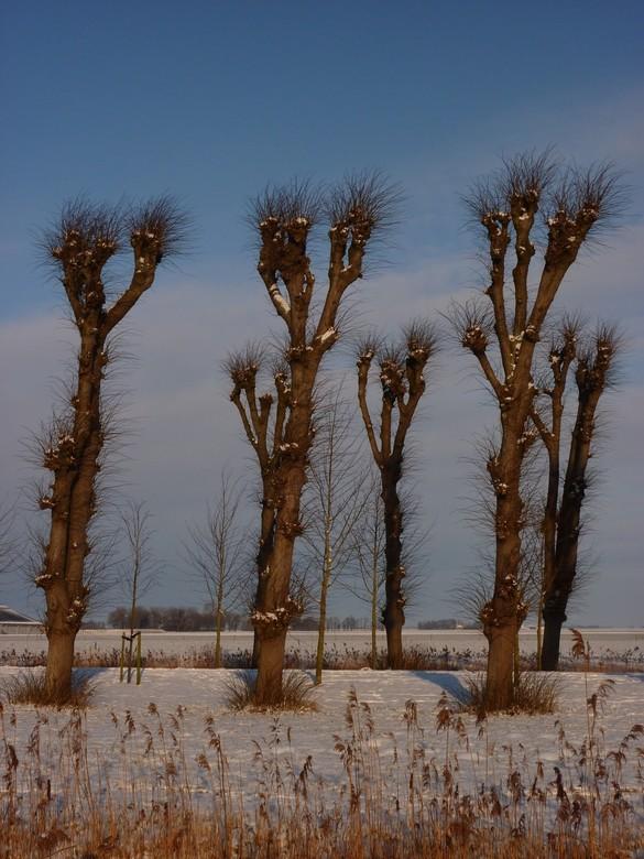 Laan Borg Ewsum - Laan Borg Ewsum in de winter