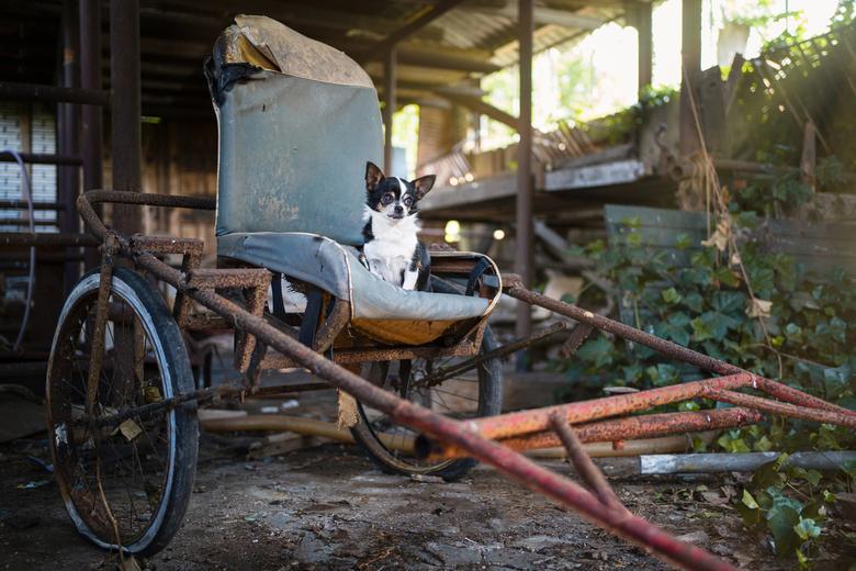 Ruby Urbex - Ik combineer sinds kort hondenportretten met Urbex fotografie. Dit is een van mijn eerst foto's met deze combi.