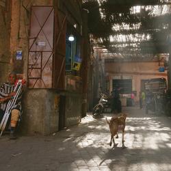 A dog in Medina