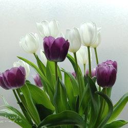zijdezachte tulpen
