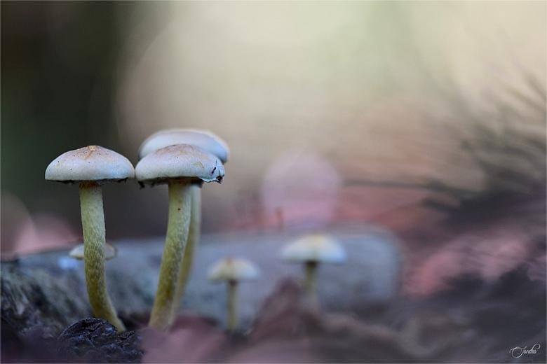 In het donkere bos -